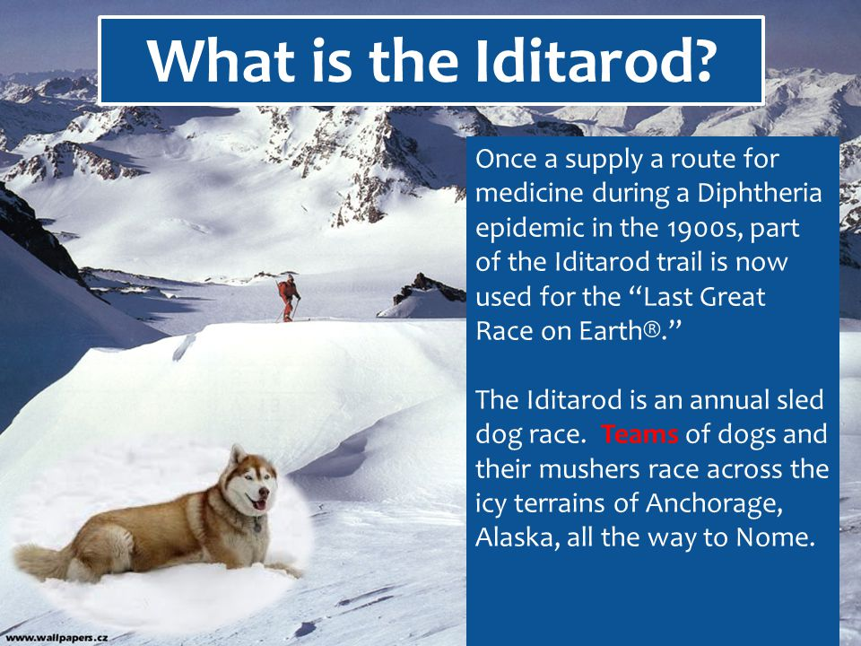 Once a supply a route for medicine during a Diphtheria epidemic in the 1900s, part of the Iditarod trail is now used for the Last Great Race on Earth®