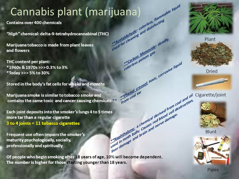 Cannabis plant (marijuana) Plant Dried Cigarette/joint Blunt Pipes Contains over 400 chemicals High chemical: delta-9-tetrahydrocannabinal (THC) Marijuana tobacco is made from plant leaves and flowers THC content per plant: *1960s & 1970s >>> 0.3% to 3% *Today >>> 5% to 30% Stored in the bodys fat cells for weeks and months Marijuana smoke is similar to tobacco smoke and contains the same toxic and cancer causing chemicals ** Each joint deposits into the smokers lungs 4 to 5 times more tar than a regular cigarette 3 to 4 joints = 11 tobacco cigarettes Frequent use often impairs the smokers maturity psychologically, socially, professionally and spiritually Of people who begin smoking after 18 years of age, 10% will become dependent.