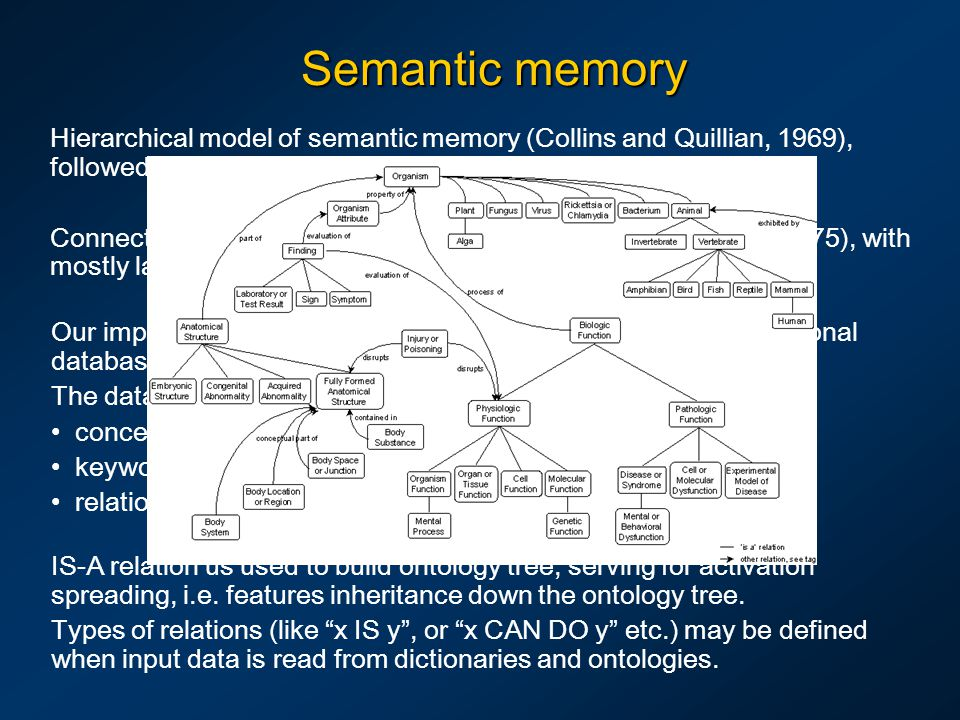 Semantic memory Hierarchical model of semantic memory (Collins and Quillian, 1969), followed by most ontologies.