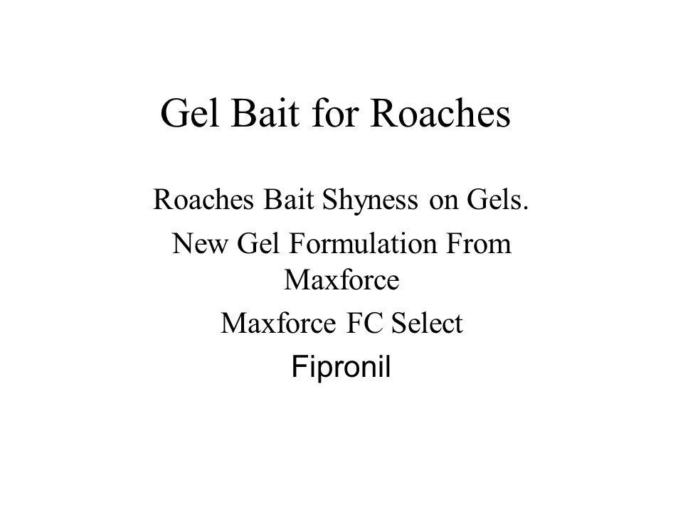 Gel Bait for Roaches Roaches Bait Shyness on Gels.