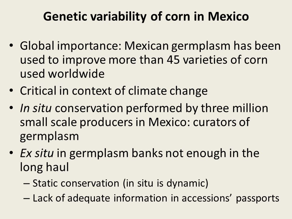In situ Conservation of Genetic Resources Maize in Mexico: well adapted to complex tapestry of agro- ecosystems.