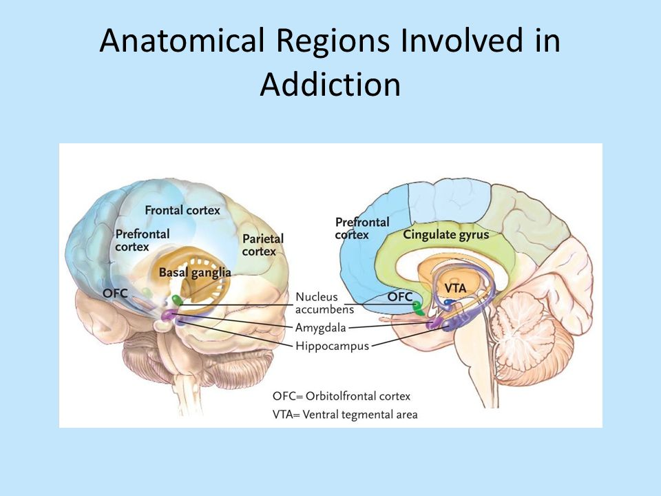 Anatomical Regions Involved in Addiction