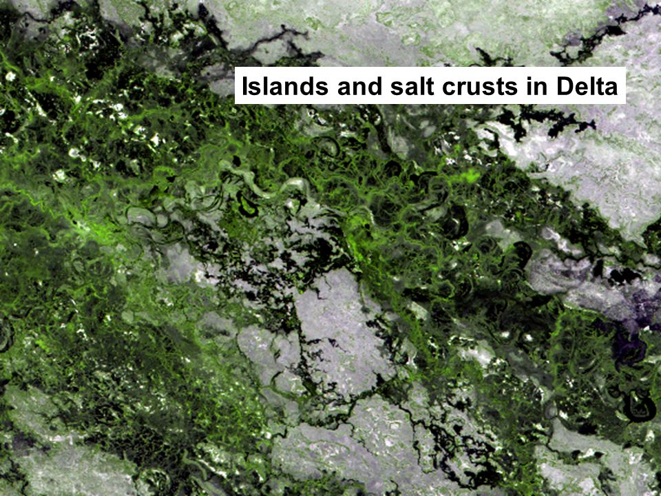 Islands and salt crusts in Delta