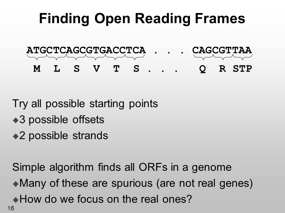 16 Finding Open Reading Frames Try all possible starting points 3 possible offsets 2 possible strands Simple algorithm finds all ORFs in a genome Many