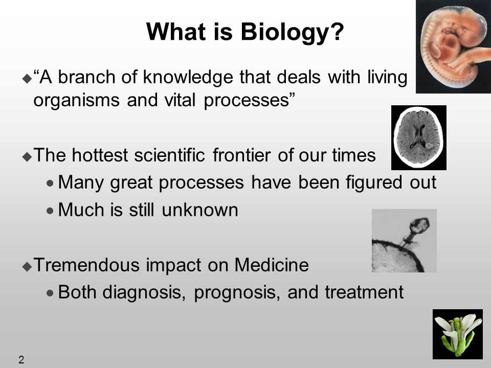 3 Bakers Yeast Saccharomyces Cereviciae Used to make bread and beer The simplest cell that still resembles human cells