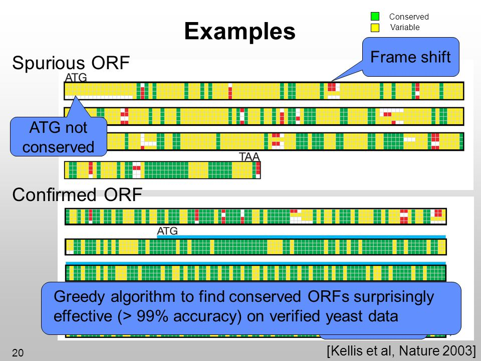20 Frame shift [Kellis et al, Nature 2003] Sequencing error Examples Spurious ORF Confirmed ORF Conserved Variable ATG not conserved Greedy algorithm