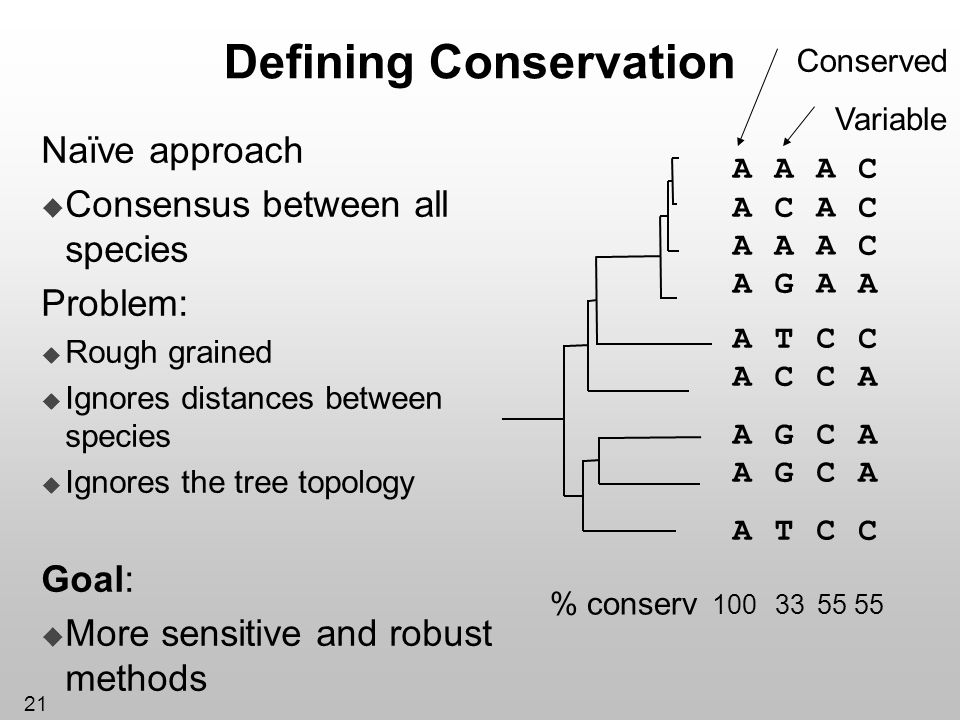 21 Defining Conservation Naïve approach Consensus between all species Problem: Rough grained Ignores distances between species Ignores the tree topolo