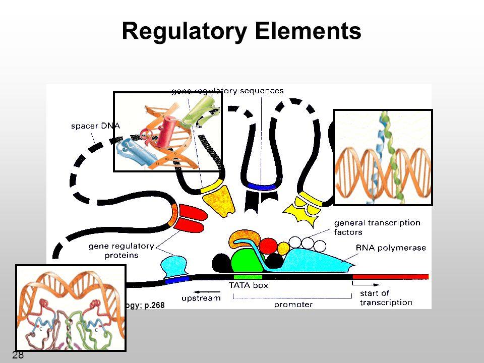 28 Regulatory Elements *Essential Cell Biology; p.268
