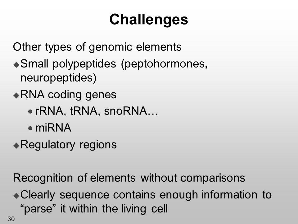 30 Challenges Other types of genomic elements Small polypeptides (peptohormones, neuropeptides) RNA coding genes rRNA, tRNA, snoRNA… miRNA Regulatory