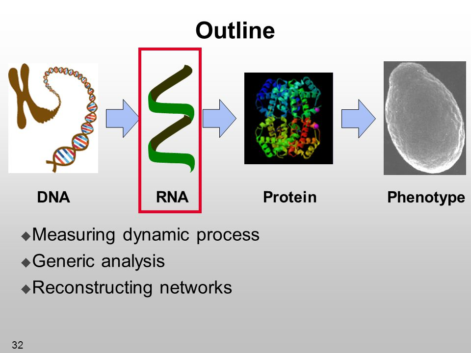 32 Outline Protein DNA RNA Phenotype Measuring dynamic process Generic analysis Reconstructing networks