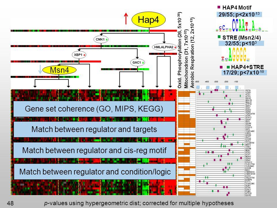 48 -500-400-300-200-100 Oxid. Phosphorylation (26, 5x10 -35 ) Mitochondrion (31, 7x10 -32 ) Aerobic Respiration (12, 2x10 -13 ) Hap4 Msn4 Gene set coh