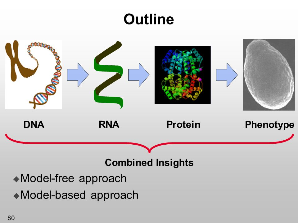 80 Outline Model-free approach Model-based approach Protein DNA RNA Phenotype Combined Insights