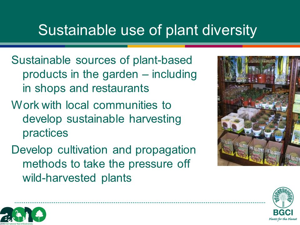 Sustainable use of plant diversity Sustainable sources of plant-based products in the garden – including in shops and restaurants Work with local communities to develop sustainable harvesting practices Develop cultivation and propagation methods to take the pressure off wild-harvested plants