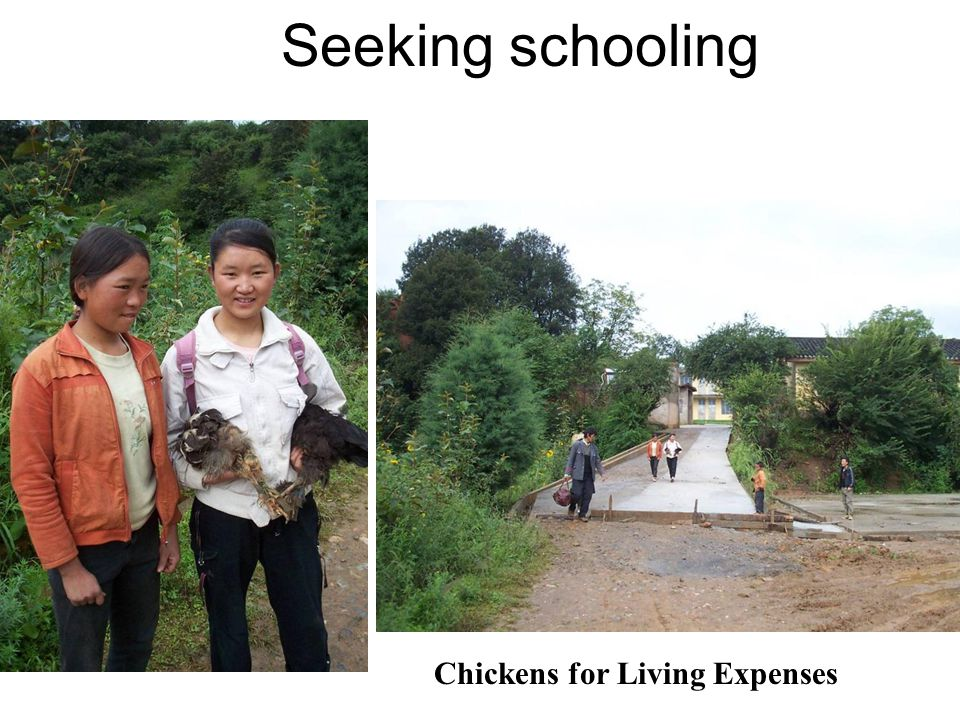 Seeking schooling Chickens for Living Expenses