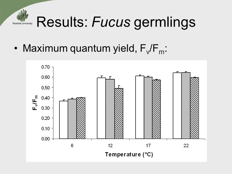 Results: Fucus germlings Maximum quantum yield, F v /F m :