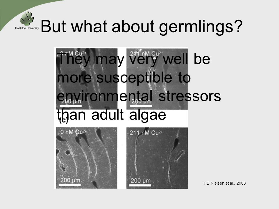 But what about germlings? HD Nielsen et al., 2003 They may very well be more susceptible to environmental stressors than adult algae