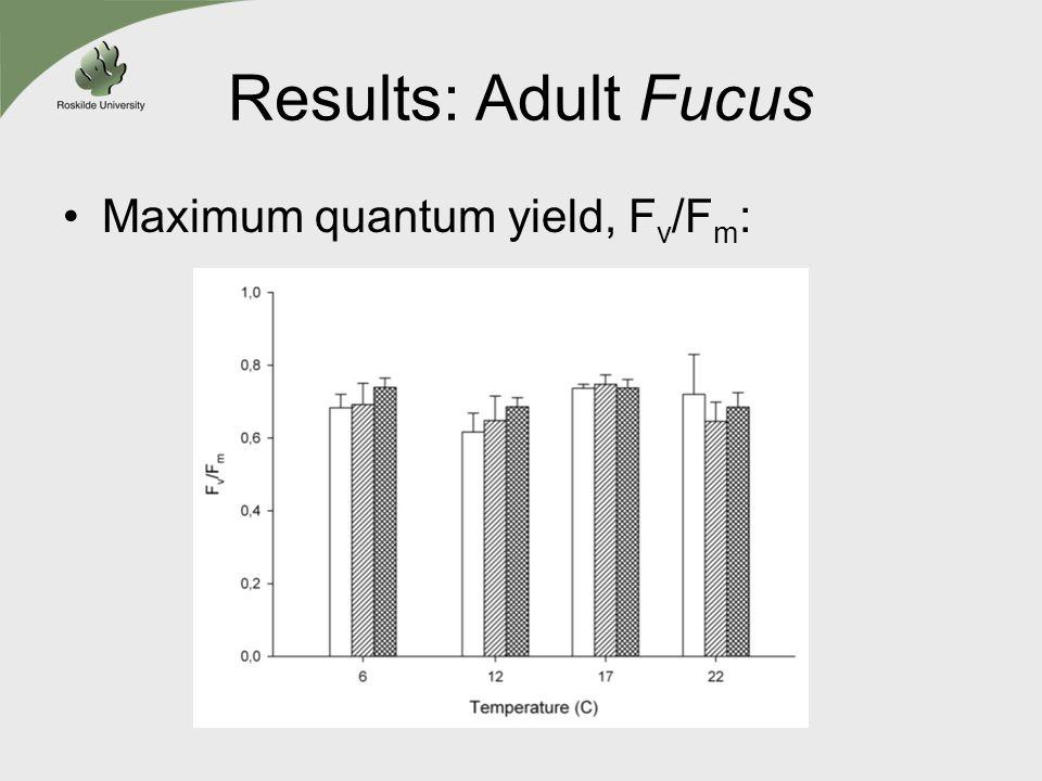 Results: Adult Fucus Maximum quantum yield, F v /F m :