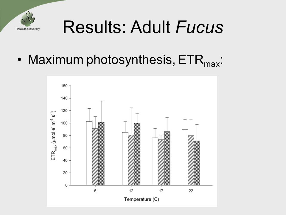 Results: Adult Fucus Maximum photosynthesis, ETR max :