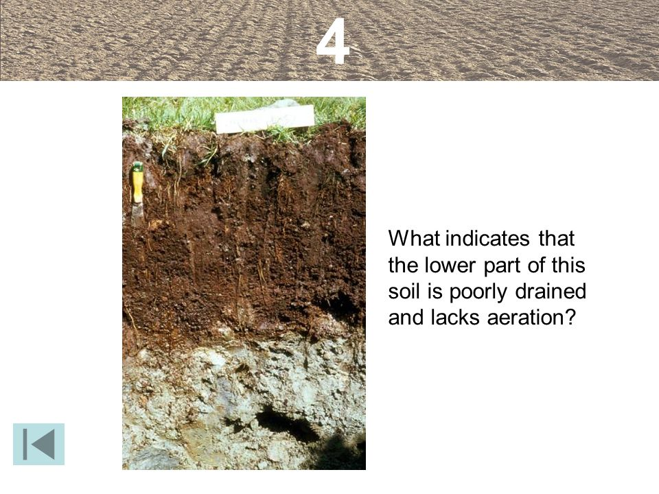 What indicates that the lower part of this soil is poorly drained and lacks aeration? 4