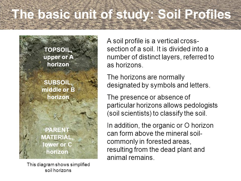 The basic unit of study: Soil Profiles A soil profile is a vertical cross- section of a soil. It is divided into a number of distinct layers, referred