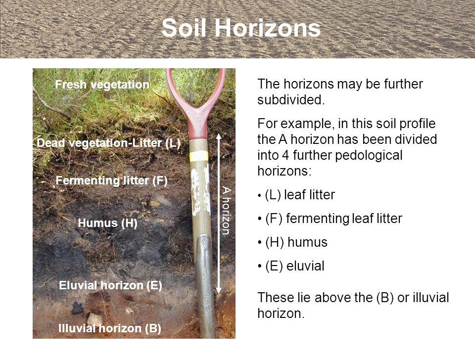 The horizons may be further subdivided. For example, in this soil profile the A horizon has been divided into 4 further pedological horizons: (L) leaf