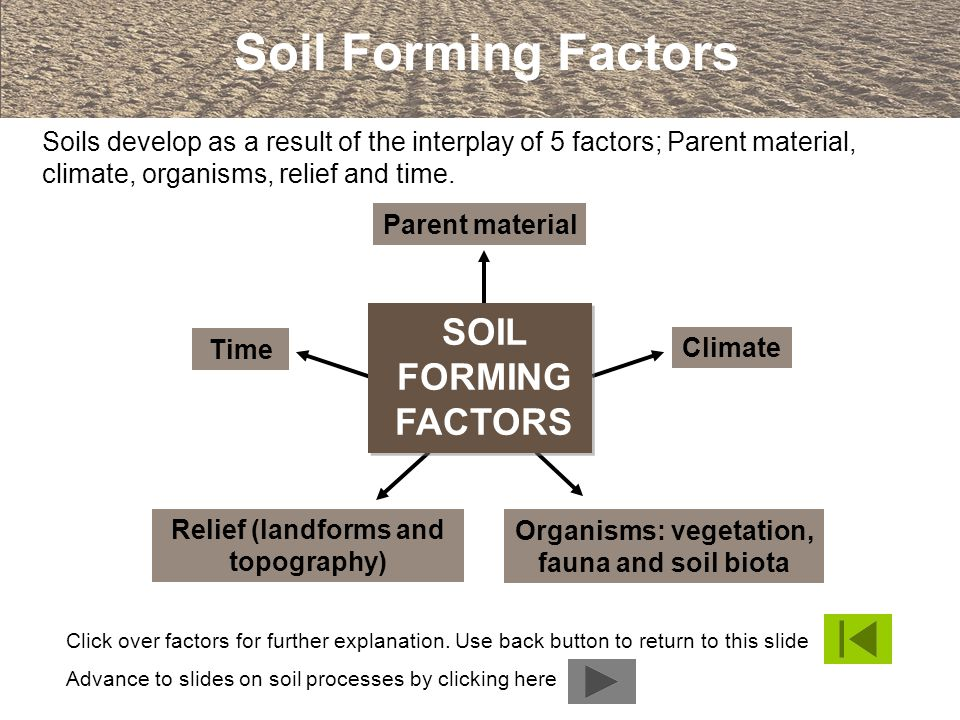 Parent material Organisms: vegetation, fauna and soil biota Relief (landforms and topography) Climate Time Click over factors for further explanation.
