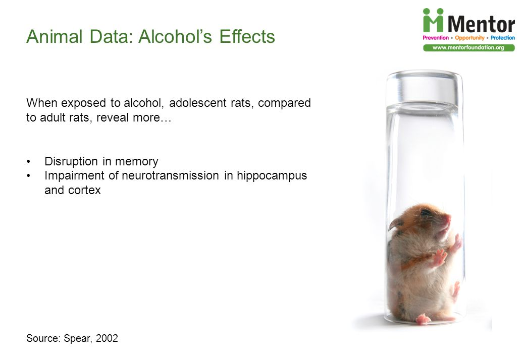 Animal Data: Alcohols Effects Source: Spear, 2002 When exposed to alcohol, adolescent rats, compared to adult rats, reveal more… Disruption in memory Impairment of neurotransmission in hippocampus and cortex
