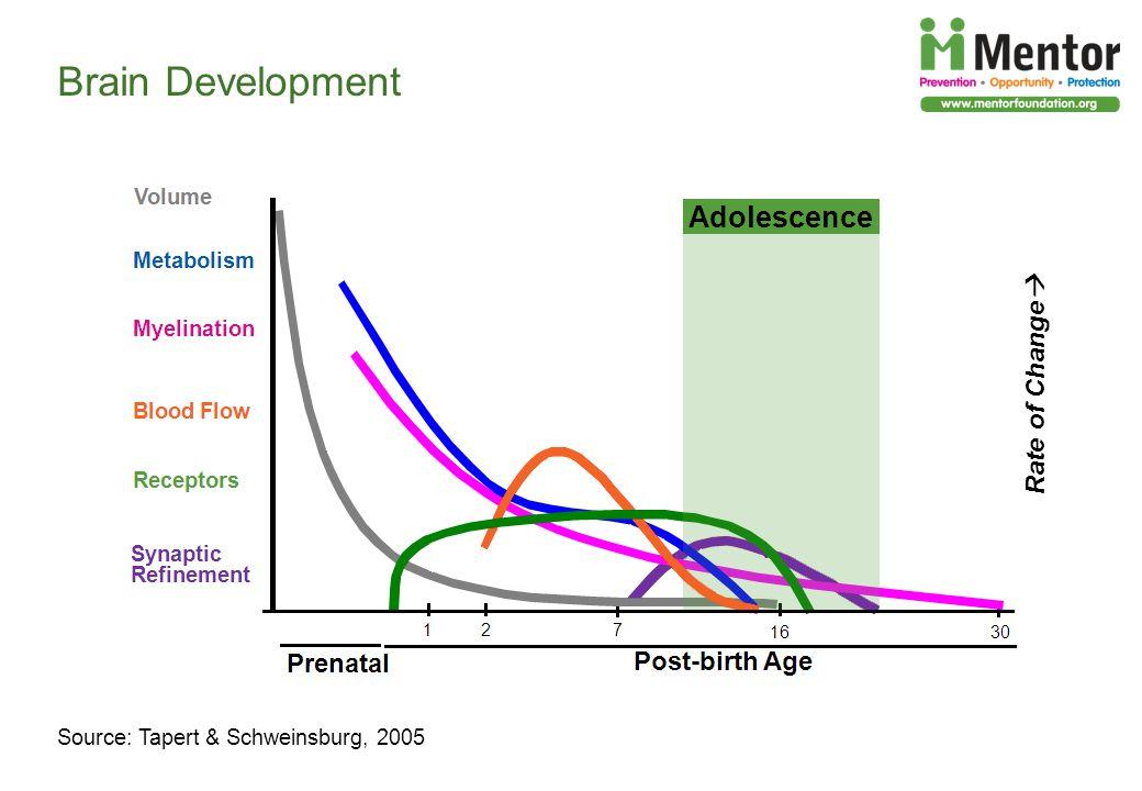Rate of Change Brain Development Source: Tapert & Schweinsburg, 2005