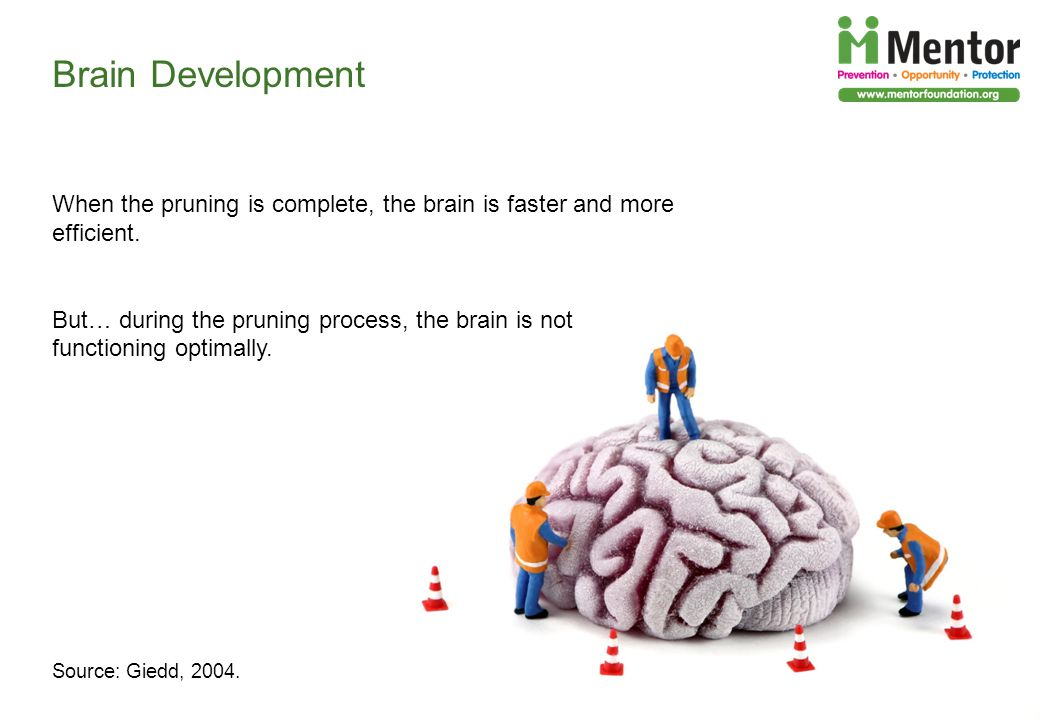Brain Development When the pruning is complete, the brain is faster and more efficient.