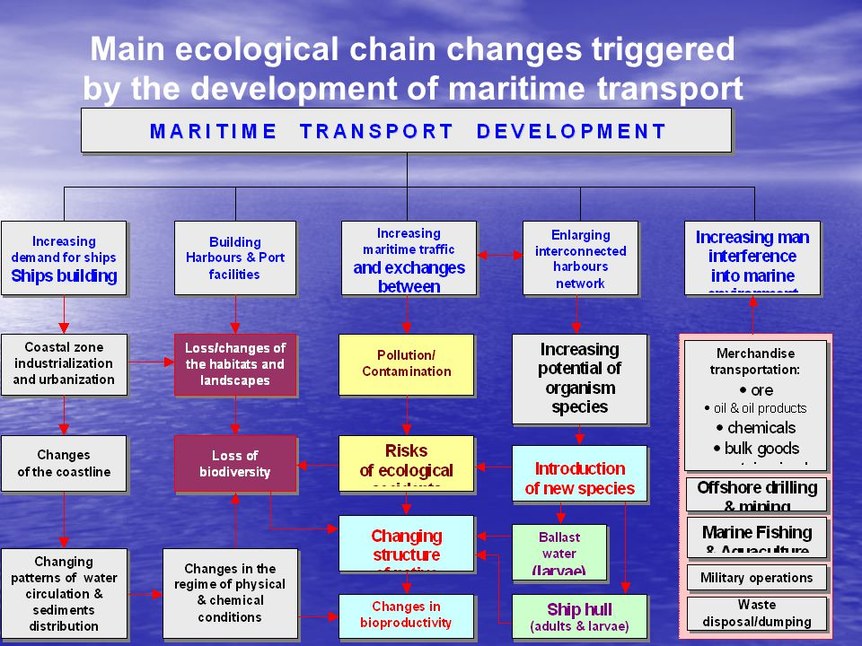 Main ecological chain changes triggered by the development of maritime transport