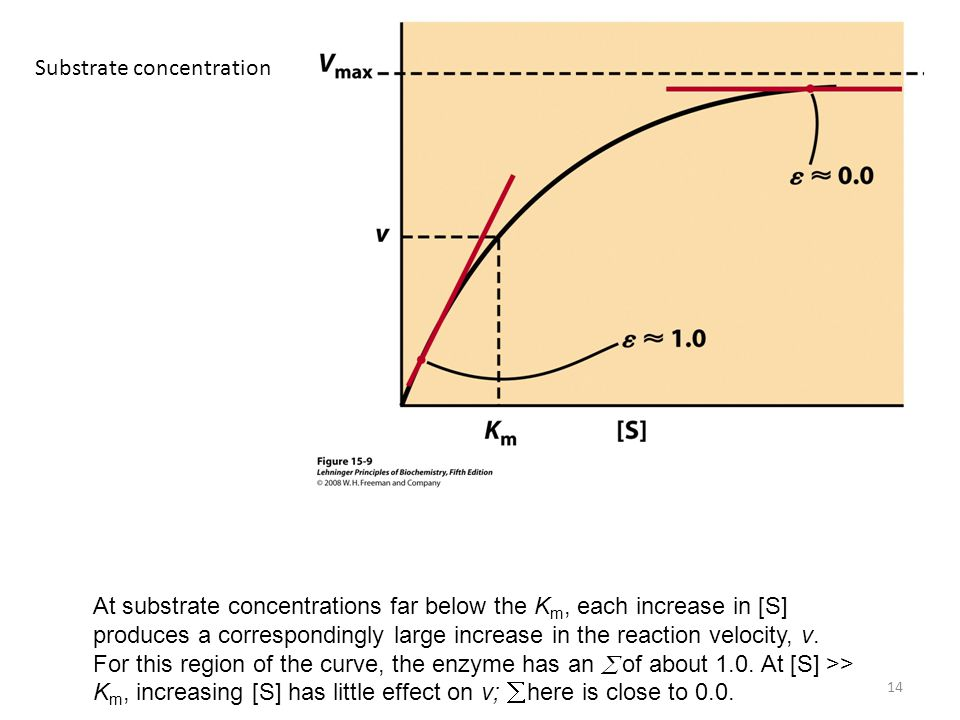 14 At substrate concentrations far below the K m, each increase in [S] produces a correspondingly large increase in the reaction velocity, v. For this