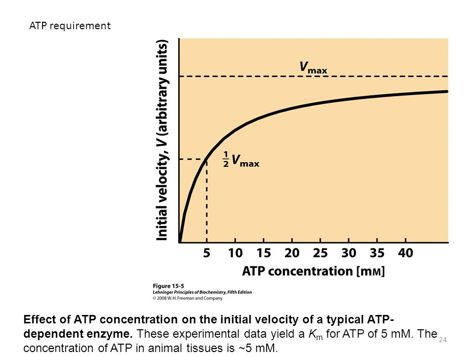24 ATP requirement Effect of ATP concentration on the initial velocity of a typical ATP- dependent enzyme. These experimental data yield a K m for ATP