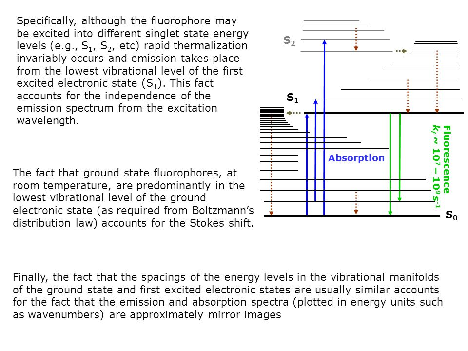 Specifically, although the fluorophore may be excited into different singlet state energy levels (e.g., S 1, S 2, etc) rapid thermalization invariably occurs and emission takes place from the lowest vibrational level of the first excited electronic state (S 1 ).
