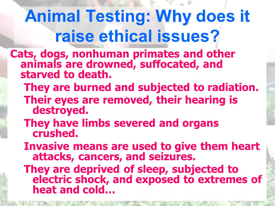 Why Animal Testing: Why does it raise ethical issues.
