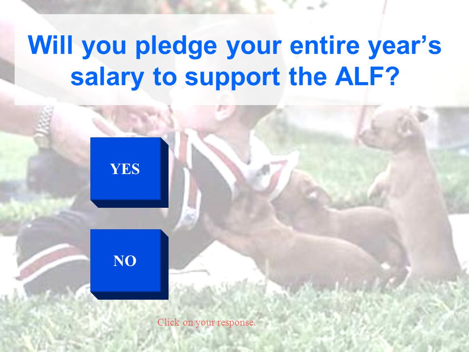 YES NO Click on your response. Will you pledge your entire years salary to support the ALF?