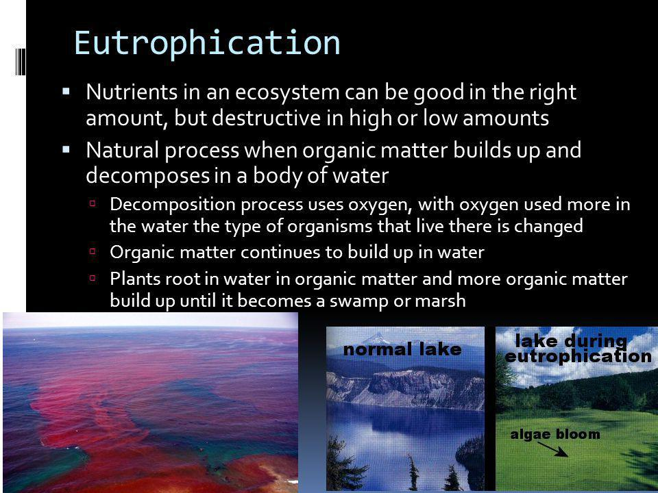 Eutrophication Nutrients in an ecosystem can be good in the right amount, but destructive in high or low amounts Natural process when organic matter builds up and decomposes in a body of water Decomposition process uses oxygen, with oxygen used more in the water the type of organisms that live there is changed Organic matter continues to build up in water Plants root in water in organic matter and more organic matter build up until it becomes a swamp or marsh