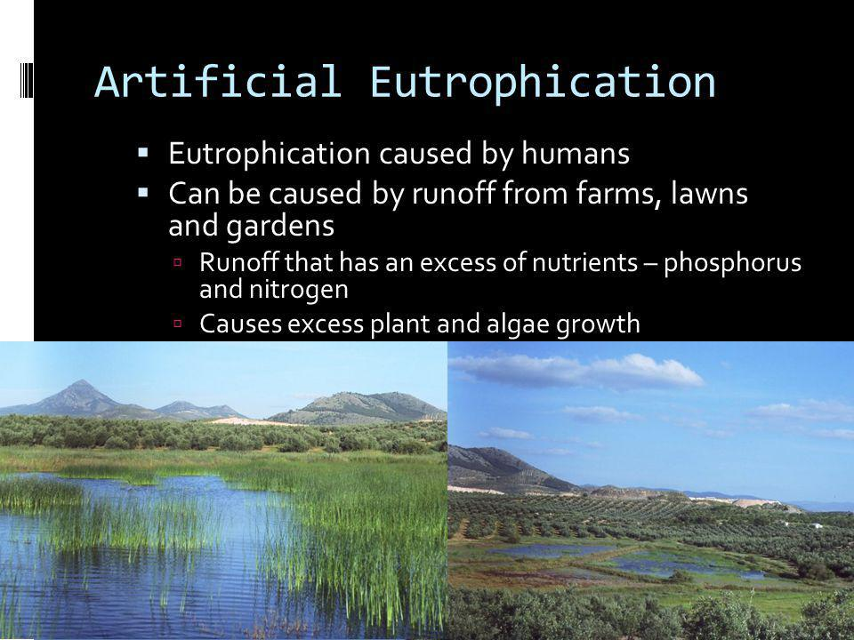 Artificial Eutrophication Eutrophication caused by humans Can be caused by runoff from farms, lawns and gardens Runoff that has an excess of nutrients
