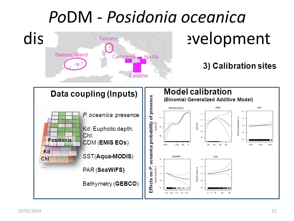 PoDM - Posidonia oceanica distribution model - Development 29/05/201422 Data coupling (Inputs) Model calibration (Binomial Generalized Additive Model) Posidonia Kd Chl P.