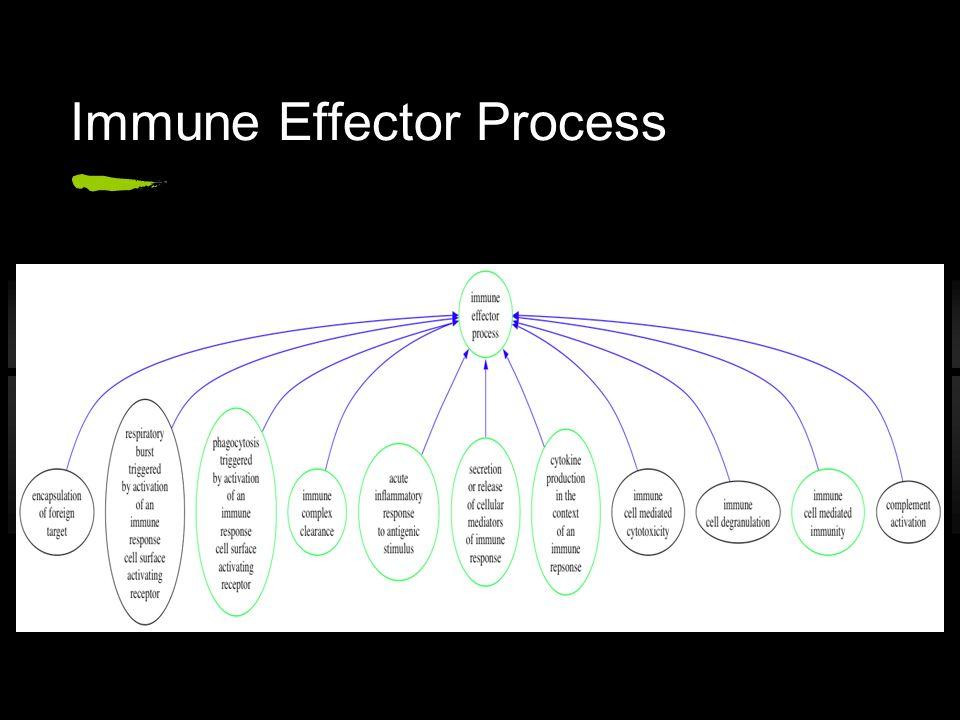 Immune Effector Process