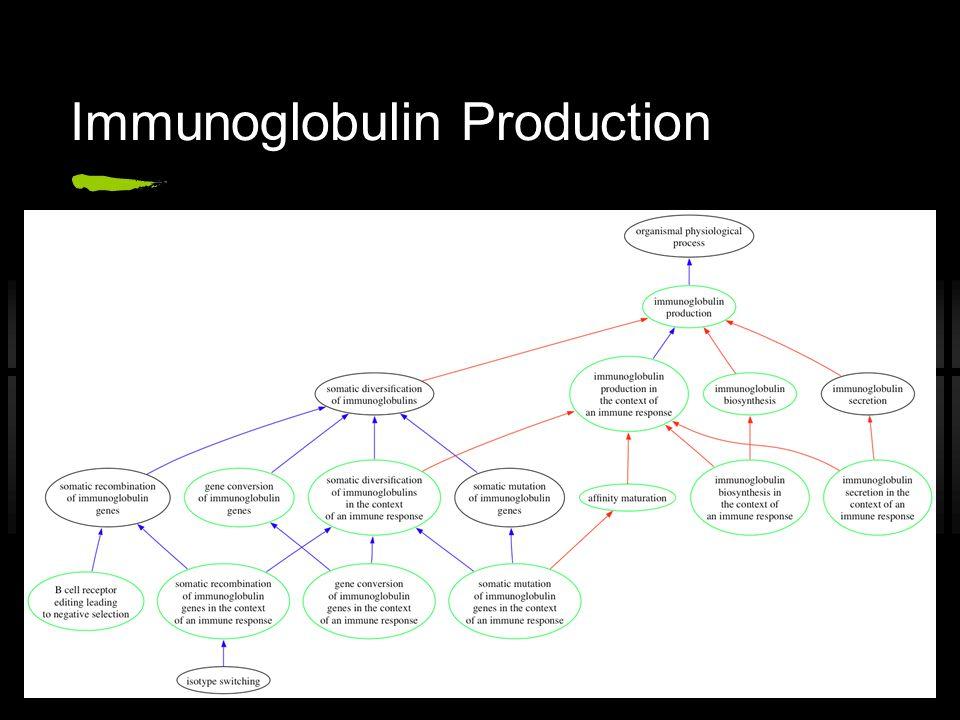 Immunoglobulin Production