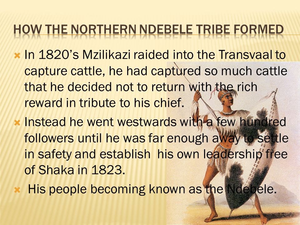 In 1820s Mzilikazi raided into the Transvaal to capture cattle, he had captured so much cattle that he decided not to return with the rich reward in t