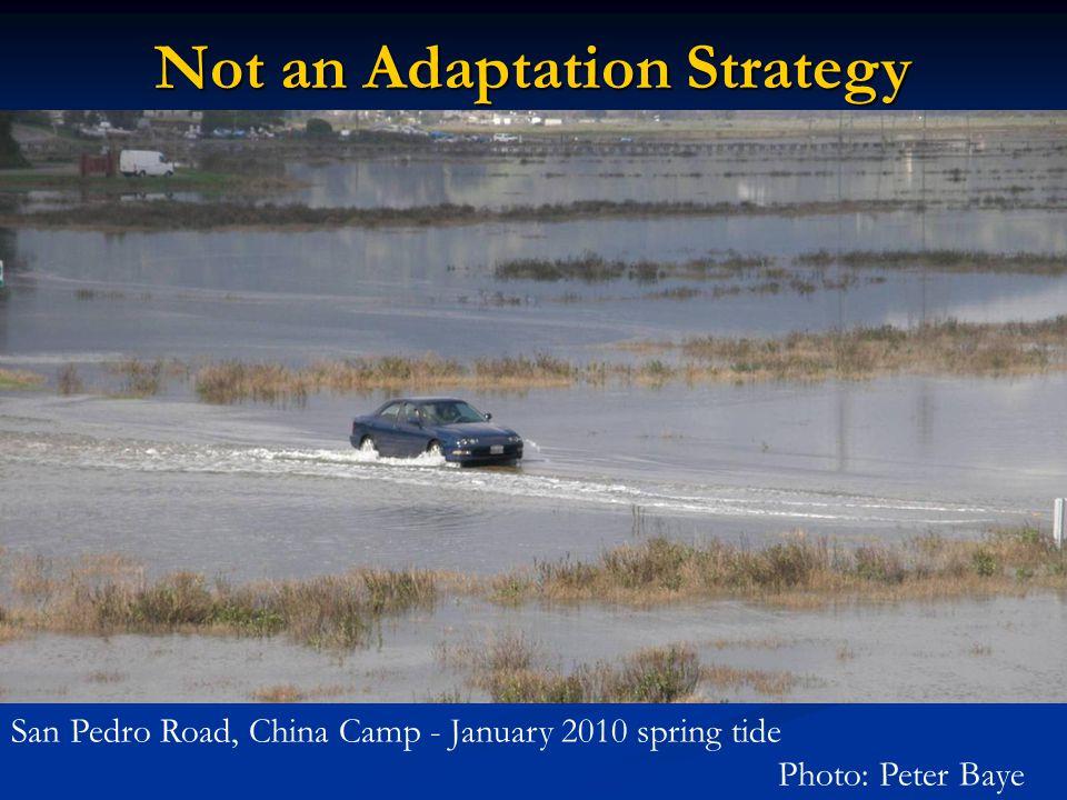 San Pedro Road, China Camp - January 2010 spring tide Photo: Peter Baye Not an Adaptation Strategy