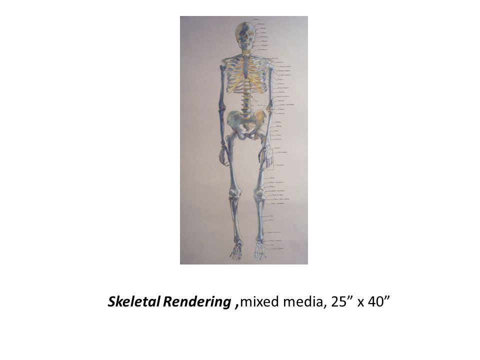 Skeletal Rendering, mixed media, 25 x 40
