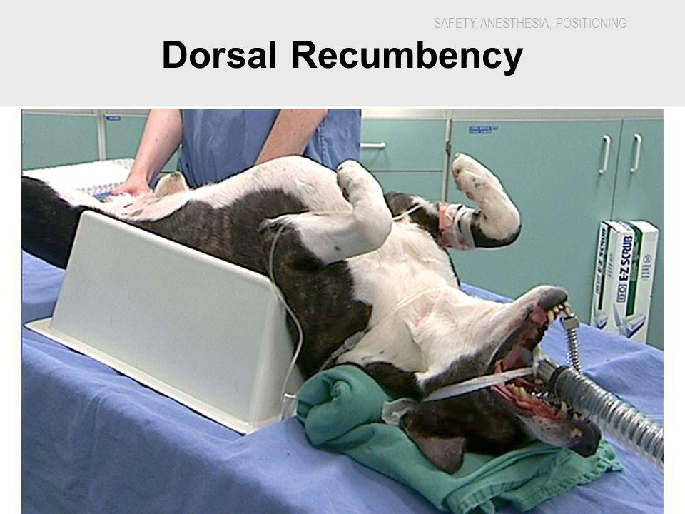 SAFETY, ANESTHESIA, POSITIONING 5888H - Veterinary Dental Nursing Dorsal Recumbency