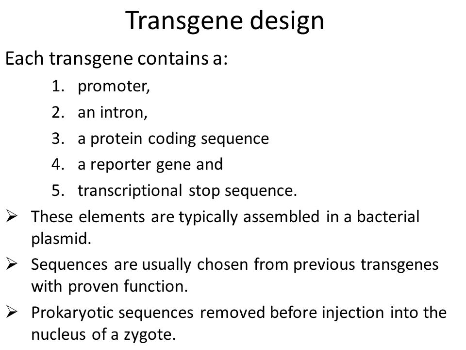 Transgene design Each transgene contains a: 1.promoter, 2.an intron, 3.a protein coding sequence 4.a reporter gene and 5.transcriptional stop sequence