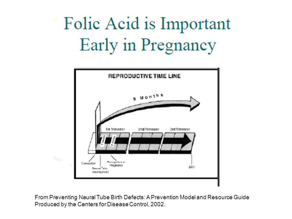 From Preventing Neural Tube Birth Defects: A Prevention Model and Resource Guide Produced by the Centers for Disease Control, 2002.