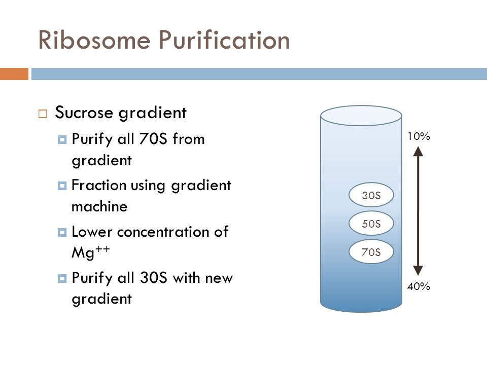 Ribosome Purification Sucrose gradient Purify all 70S from gradient Fraction using gradient machine Lower concentration of Mg ++ Purify all 30S with new gradient 10% 40% 30S 50S 70S