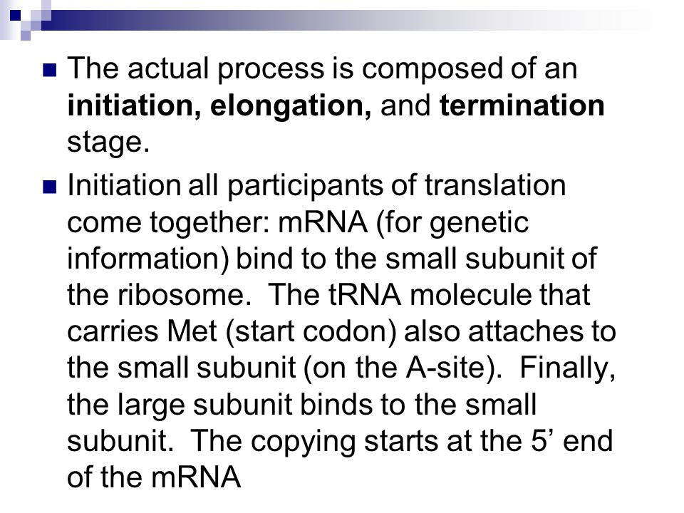 The actual process is composed of an initiation, elongation, and termination stage. Initiation all participants of translation come together: mRNA (fo