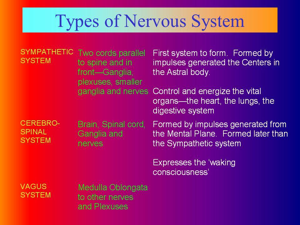 Types of Nervous System