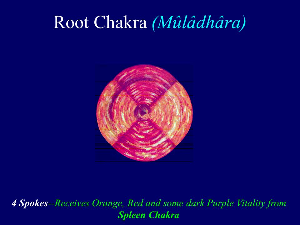 Root Chakra (Mûlâdhâra) 4 Spokes--Receives Orange, Red and some dark Purple Vitality from Spleen Chakra